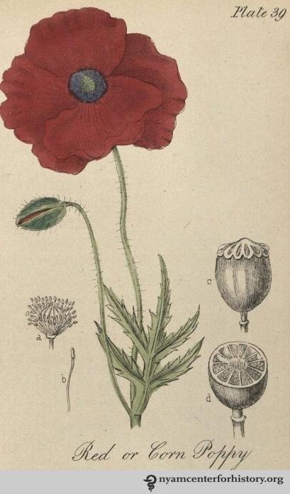 Barton-Castle_BritishFloraMedica_1877_poppy_watermark