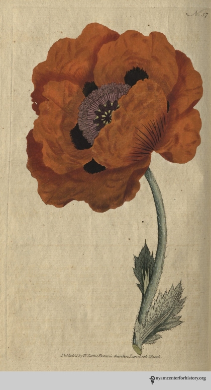 curtis-botanical-v2-1788_plate57_EasternPoppy_watermark