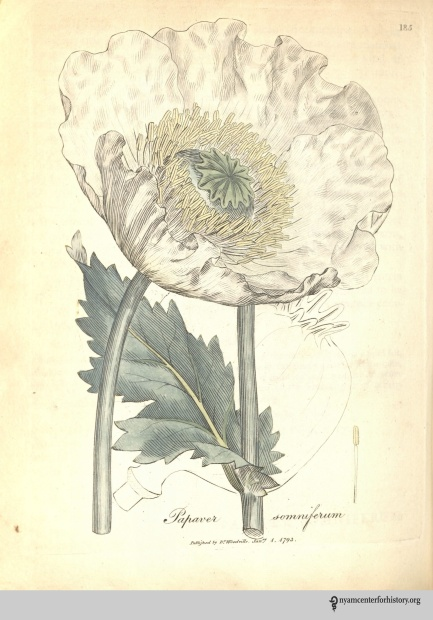 Woodville_opium poppy_1793_watermark