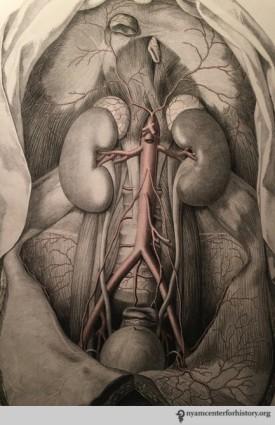 Tabulae Arteriarum_watermark