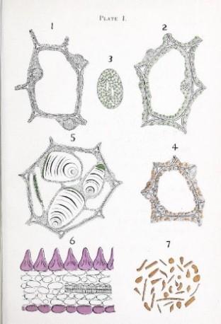 Botany Books Health And History