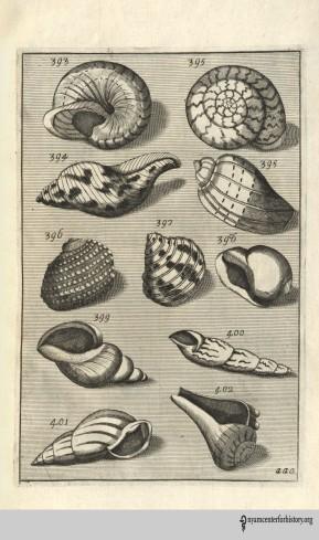 buonanni_musaeumkircherianum_1709 2_watermark