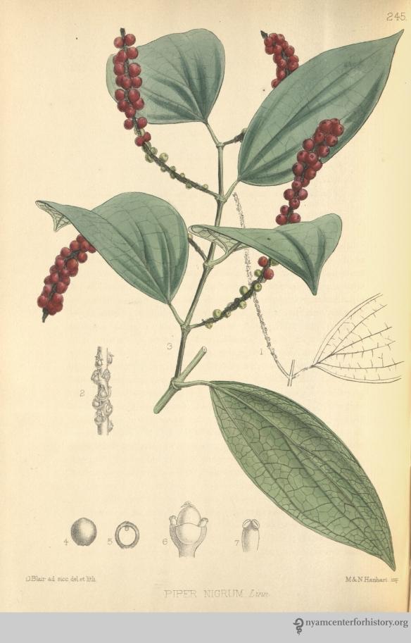 Black Pepper_Bentley_1880