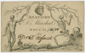 Andrew Marshal anatomy course